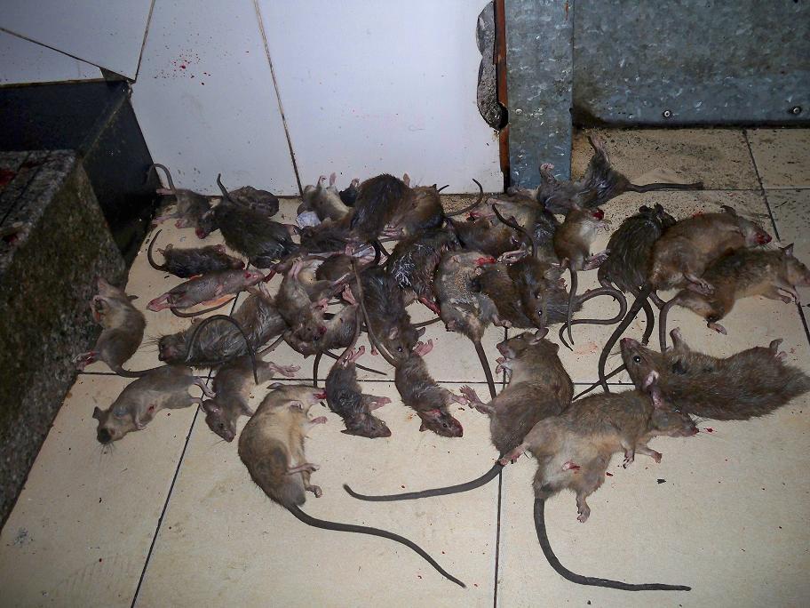 灭鼠器带报警器电路图